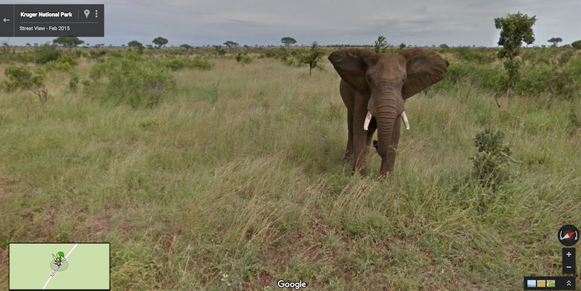 Elephant - Kruger National Park - Discover SA on Google Maps