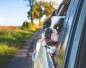 Uber launches a 'Pet' option, because what about Rocky and Rex?